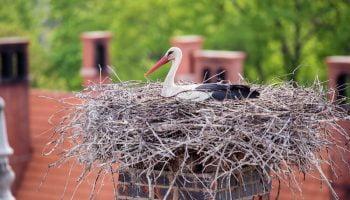 gniazdo bocianie na kominie